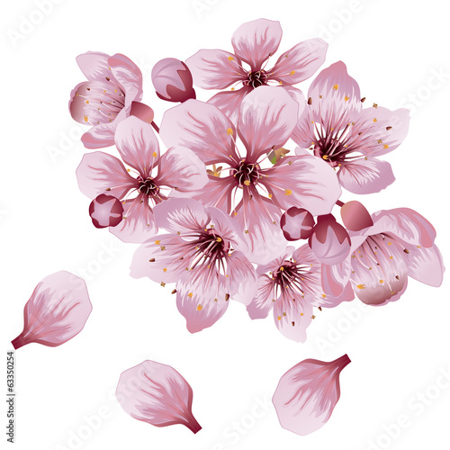 Soft Pink Sakura Flowers
