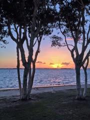 Dog Watching the Sunset, Chula Vista Bayfront Park, San Diego