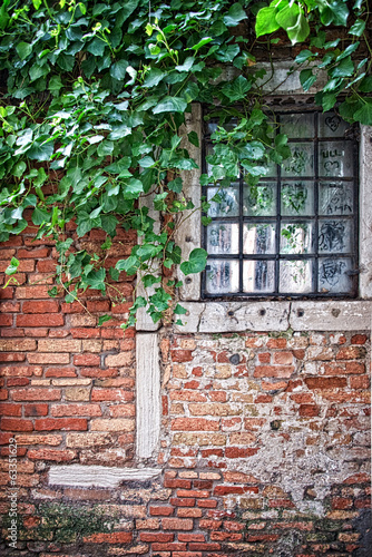 Old window with ivy in Venice