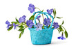 basket with blue flowers periwinkles