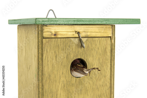 tomtit entering wooden bird house
