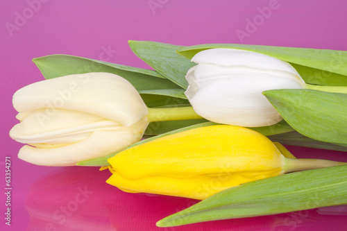 Bouquet of Tulips on pink background
