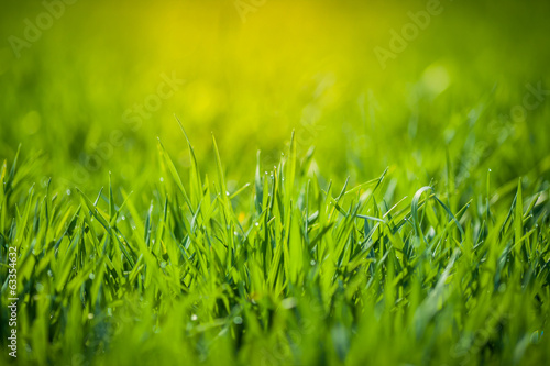 canvas print picture Fresh green grass