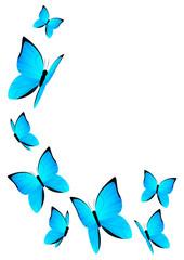 Blue butterflies for Your design