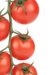 Composition of tomatoes cherry