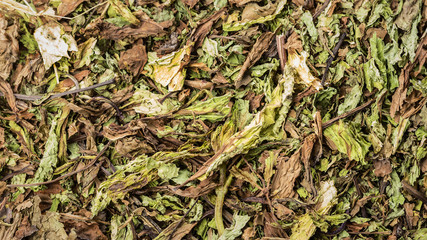 Texture dried mint