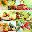 Collage of garden fruits and berries