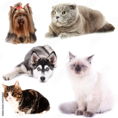Collage of cats and dogs isolated on white