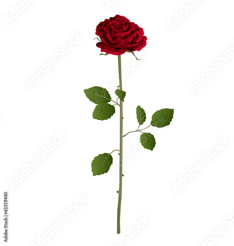Realistic rose vector