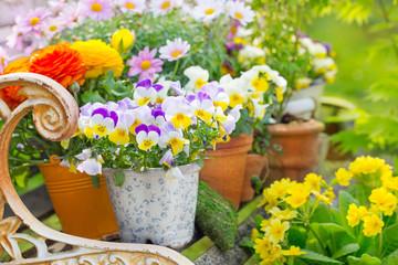 Deko mit Blumentöpfen - Garten im Frühling