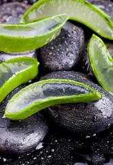 Aloe vera on black pebbles