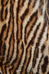 sfondo di pelle di tigre