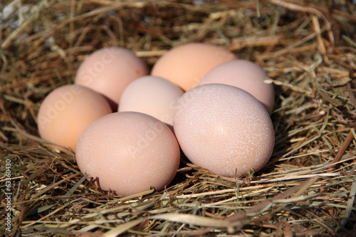 Eggs on the hay