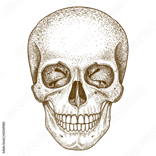 engraving skull on white background
