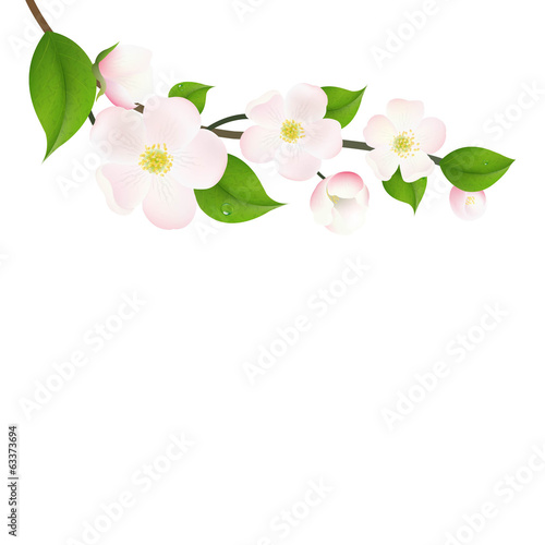 Pastel Apple Tree Flowers
