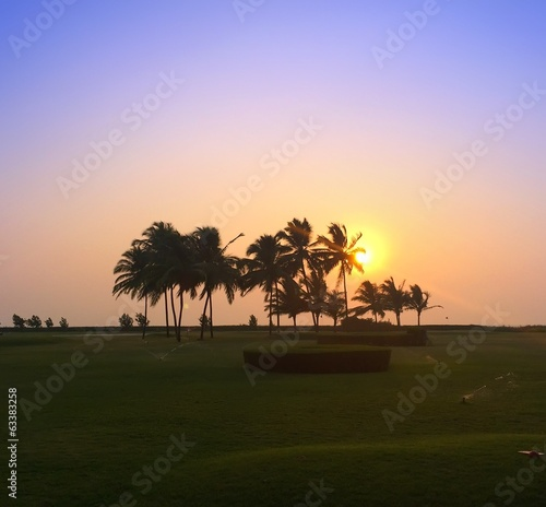 sunset over a palm grove