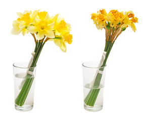 Daffodil flower in glass vase