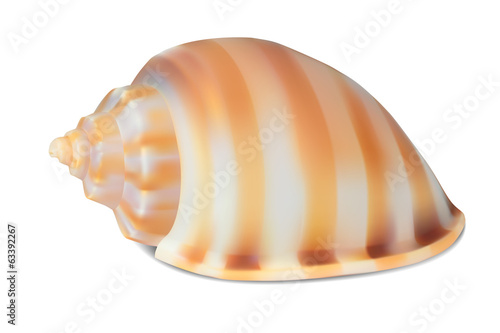 Seashell, isolated on white. Vector illustration