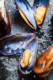 Fresh mussels on a rock