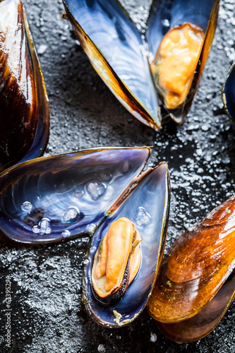 Fresh mussels on a rock