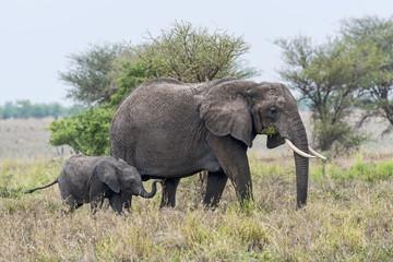 Tansania-Elefant-11691