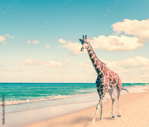 The giraffe runs on sand at seacoast,with a retro effect