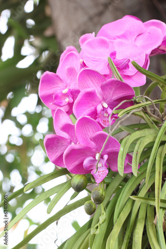 Purple orchids on trees.