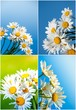 daisies against blue sky