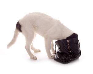 Hund mit Kopf in Handtasche