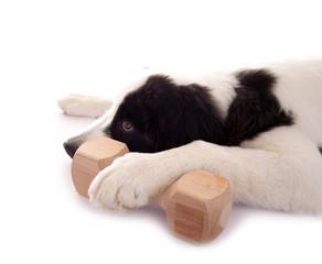 Hund mit großen Pfoten und Holzknochen