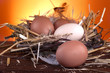 Healthy domestic eggs in a nest of straw