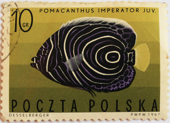 """Imperial angelfish (Pomacanthus imperator) on post stamp"""