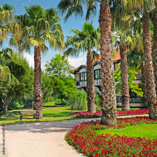 landscape with palm trees and flower beds