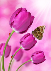 purple tulips with butterfly Morpho
