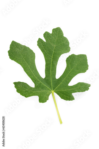 Natural leaf of fig tree isolated on white background