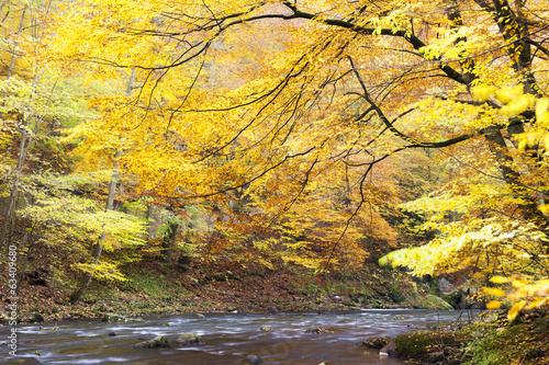 Leinwanddruck Bild Metuje river in autumn, Czech Republic