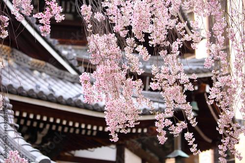 Sakura tree in japanese temple - 63409871