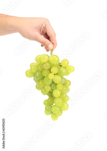 Branch of white grapes in hand.