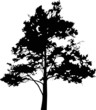 large pine tree black silhouette illustration