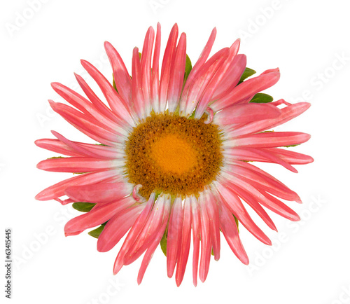 isolated single red color flower