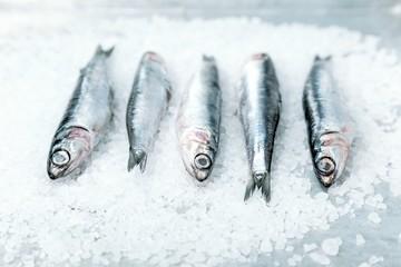 Sardinen fangfrisch