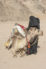 Old bedouin woman with camel in the desert