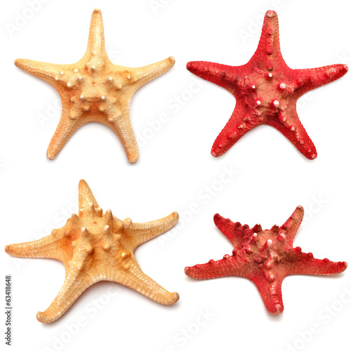Sea stars collection
