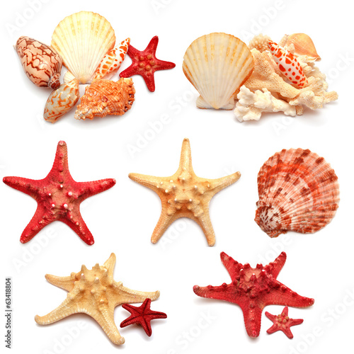 Collection of sea stars, shells and coral - 63418804