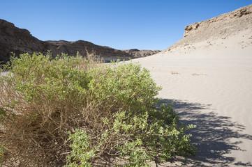 Small desert bush on a sand dune slope