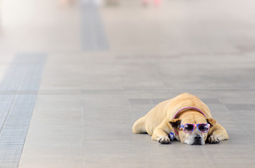 Dog with sunglasses on street BTS Sky-train