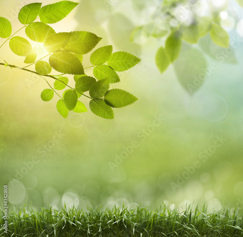 canvas print picture natural green background with selective focus