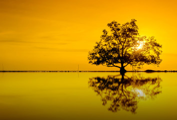 orange sunset reflection