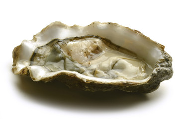 Oyster Ostron Ostrica Ostra Huître Oester محار