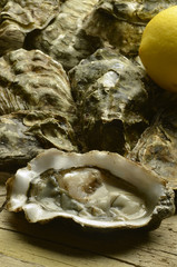 Oyster Ostron Ostrica Ostra Huître Oester устрица